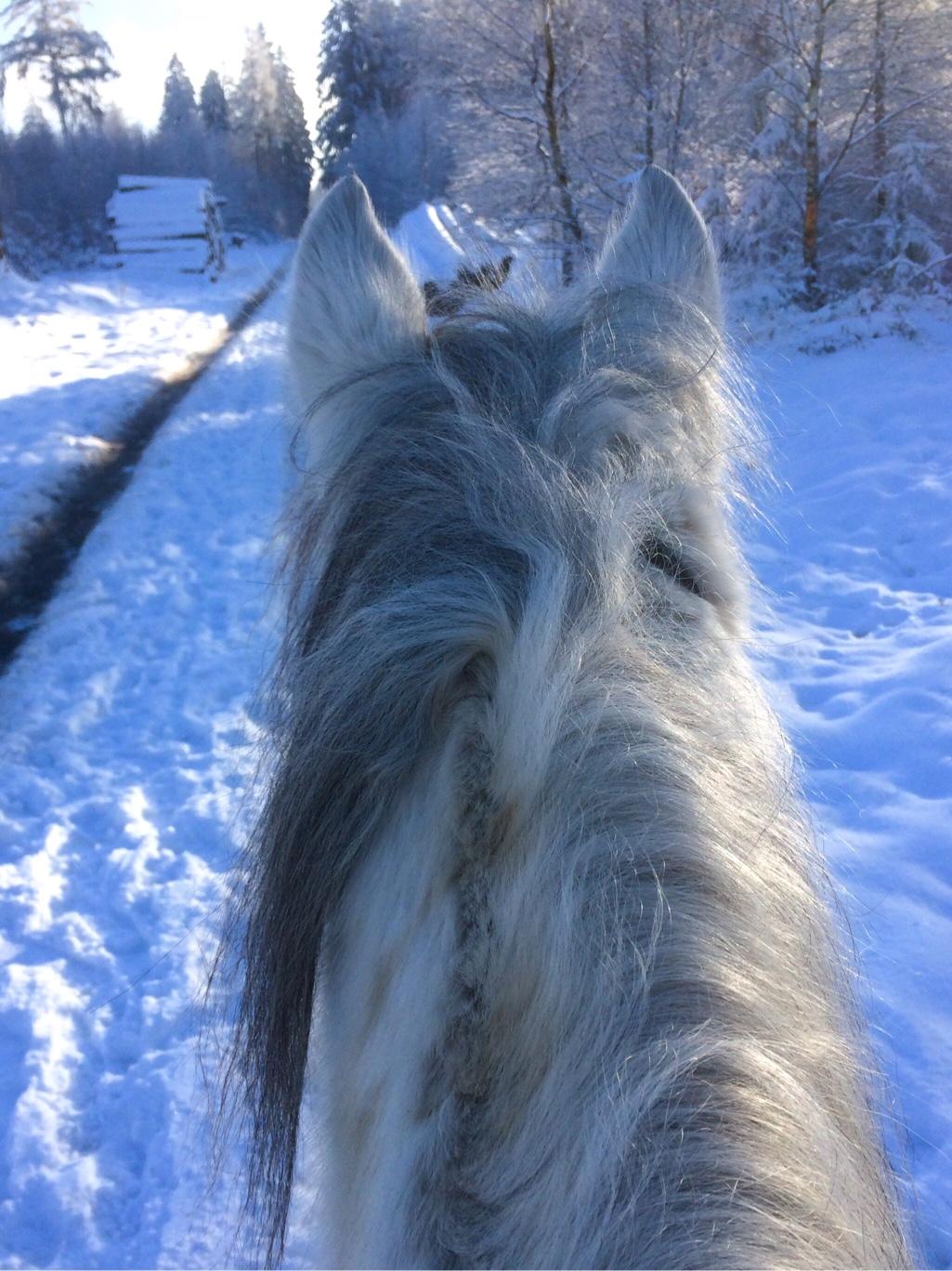 Blog Pony im Schnee